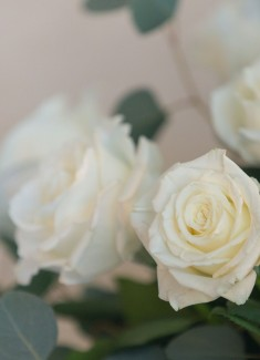 White Roses Close Up
